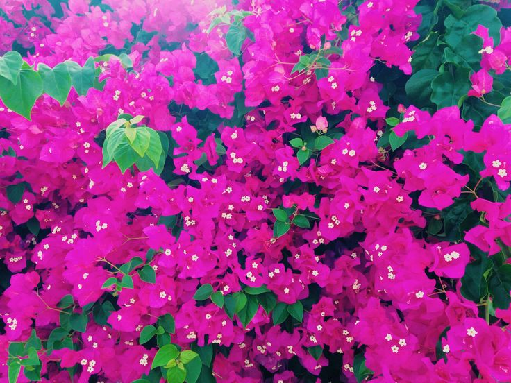 my fav flowers this summer.   // Greece