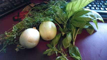 Harvest from 7/7/14 - cilantro, 2 varieties of basil & 2 lemon cucumbers