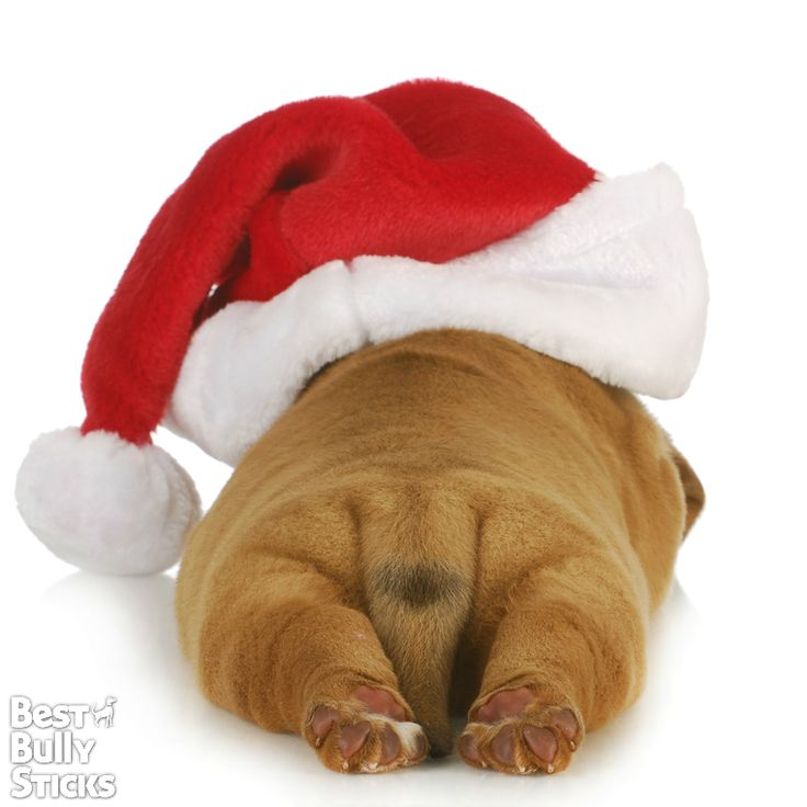 Merry Christmas from Best Bully Sticks! Enjoy this holiday with your furry friend :)