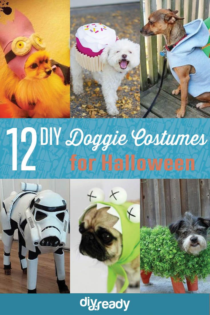 Best 25 diy dog costumes ideas on pinterest dog halloween 12 diy dog costumes cute easy homemade looks for pets by diy ready http solutioingenieria Image collections