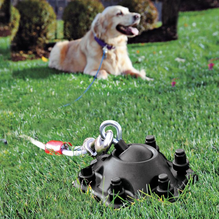 75 Best Dog Tech And Gadgets Images On Pinterest