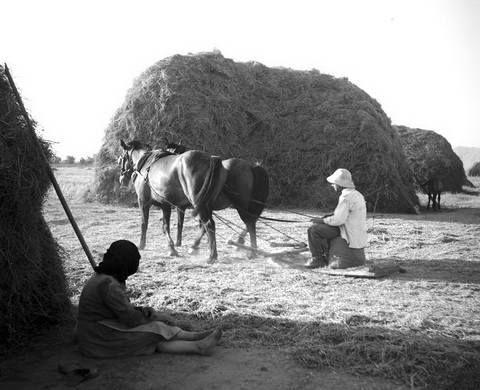 Σβάρνισμα στον Πλατύκαμπο.φωτ.Τάκης Τλούπας 1963