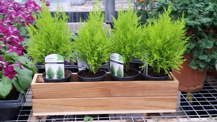 Amazon.com : 30 Inch Long X 6 Inch Height X 5 Inch Wide Teak Wood Planter Window Garden Box : Patio, Lawn & Garden