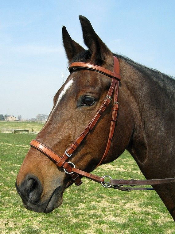 Bitless bridle (handmade in Italy). Something i will totally invest in with my own horse (someday). Don't want to ruin his mouth!