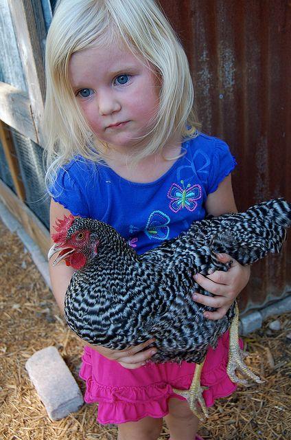 chickensPin Discriptive, Animallovebackyard Hens, Pets Chicken, Little Girls In The Country, Bar Rocks, Tops Pin, Heart Chicken, Grand Kids, Recipe Rockstar