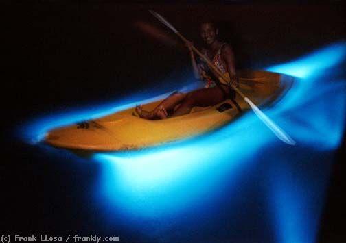 So cool! Bioluminescent Bay in Puerto Rico and Luminous Lagoon in Ochos Rios Jamaica