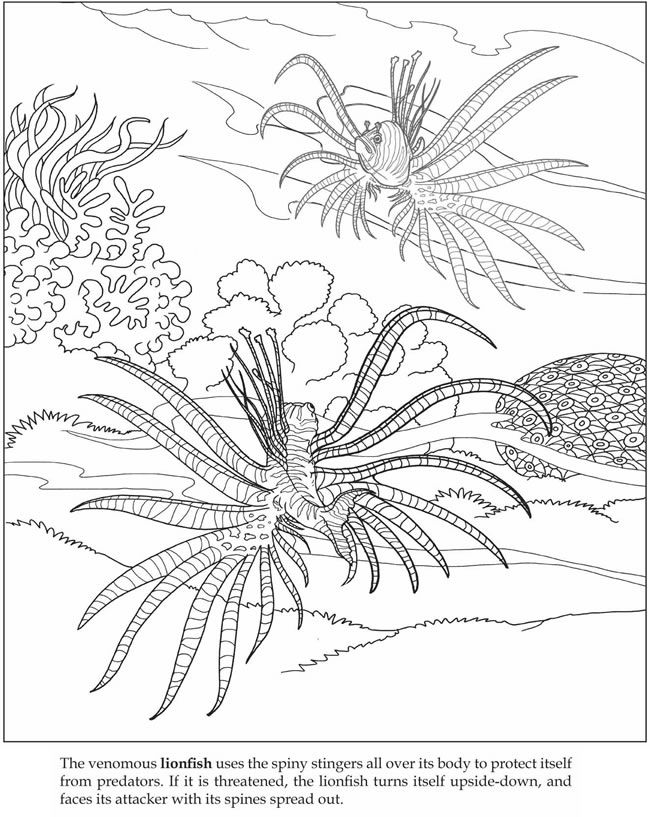 Welcome To Dover Publications Dover Coloring Pages Coloring Pages Dover Publications