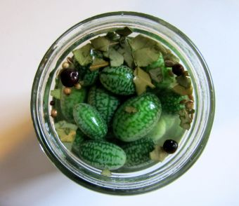 Have you seen these adorable Mexican Gherkins a the markets recently? Give them a quick pickle, and make these Mouse Melon Cornichons from Culinaria Eugenius.