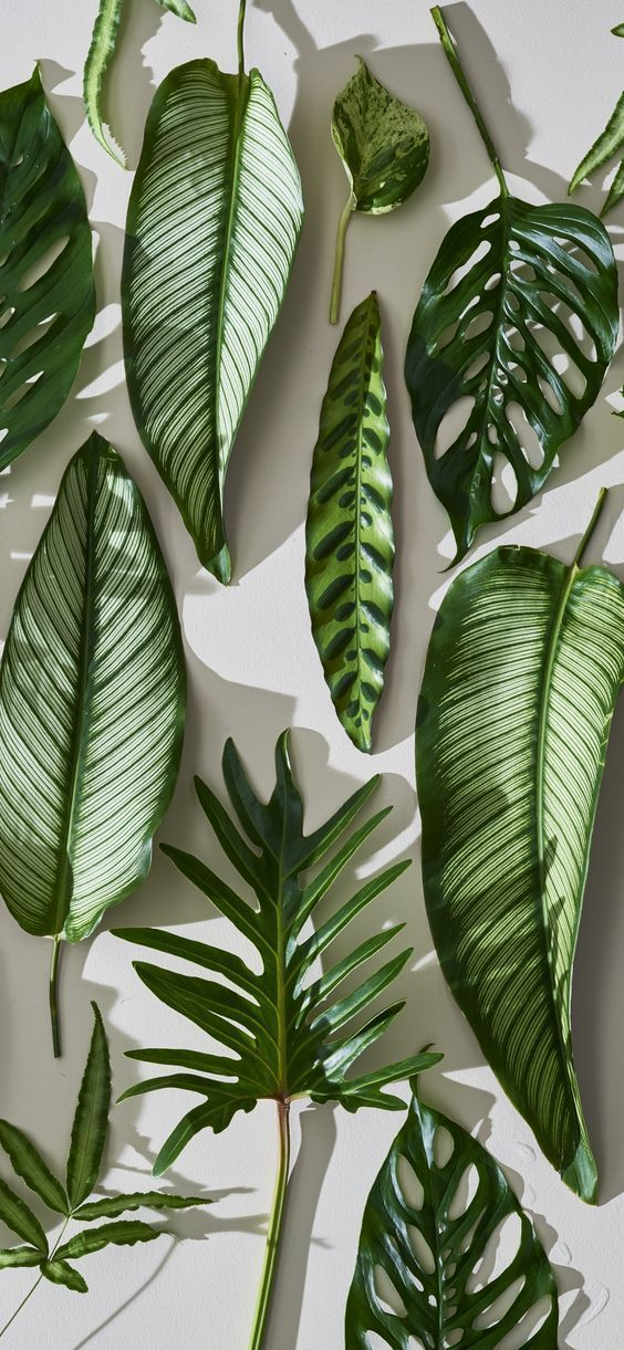 a variety of  houseplant leaves iPhone X Wallpaper 409686897352224437 1