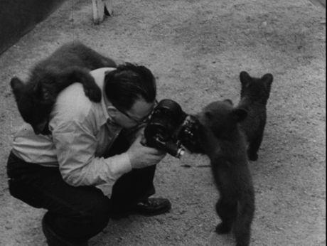 Teddy bear wants to be a the tv star [video] Repozytorium Cyfrowe Filmoteki Narodowej #bear #film #funny