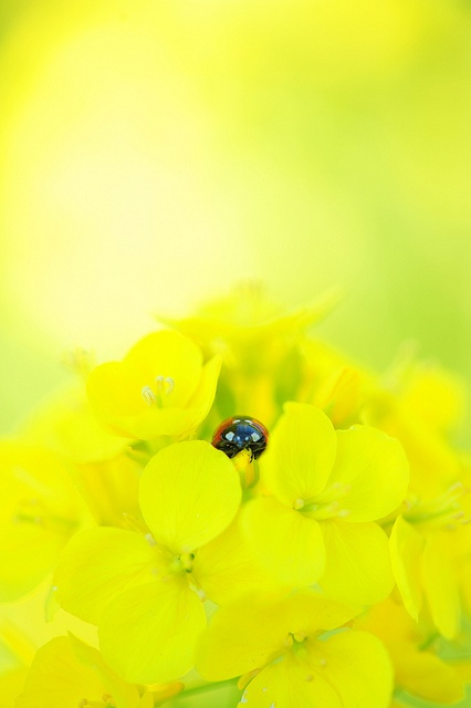 I love this bright photo, with the little lady bug!