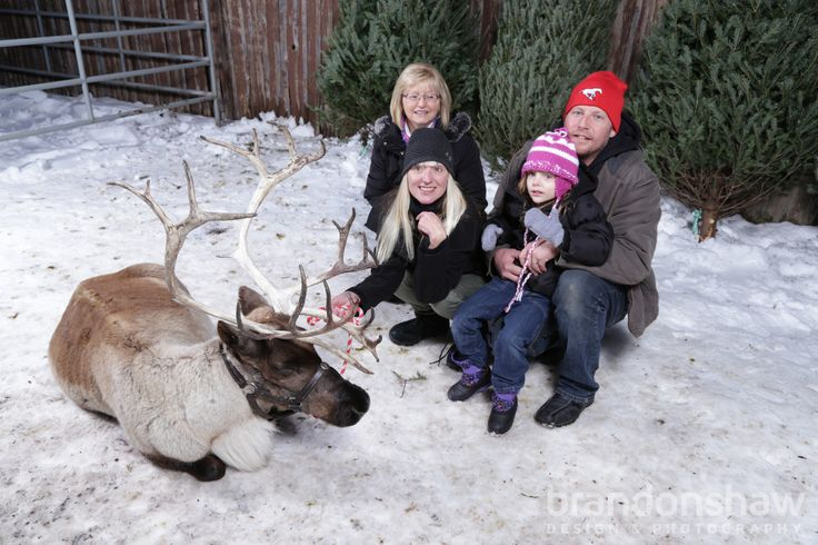 Check out the photos from 2014 Reindeer Visit Symons Valley Ranch.