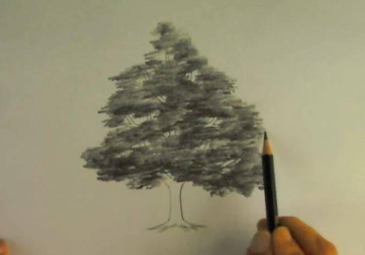 Paso 4 Para Dibujar Paisajes Con Arboles Como Aprender A Dibujar Aprender A Dibujar Paisaje A Lapiz