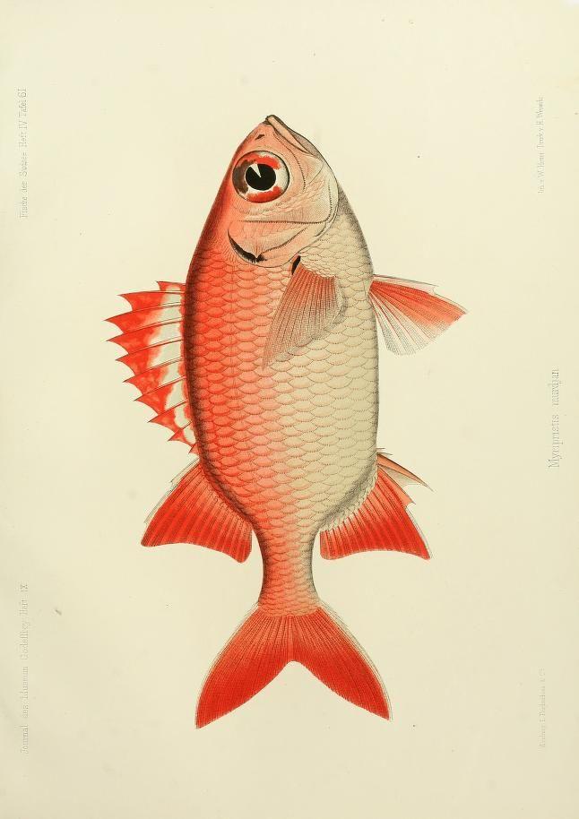 Bd.2, Hft.3,5,7,9(1873-1875) - Journal des Museum Godeffroy. - Biodiversity Heritage Library