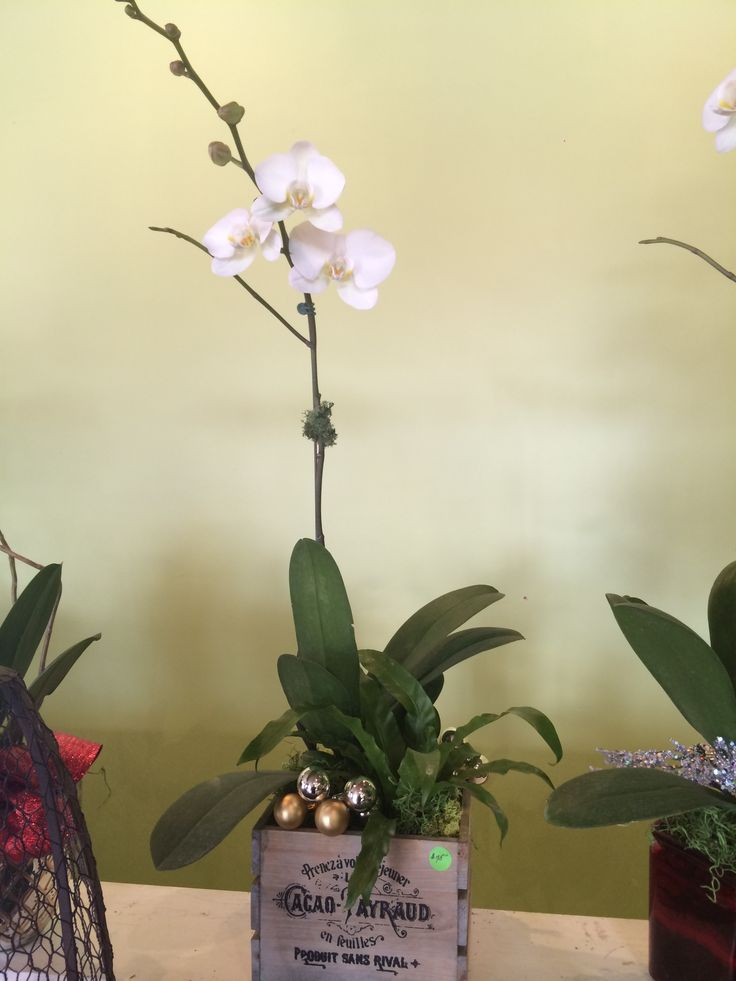 A rustic take on the class, elegant white orchid