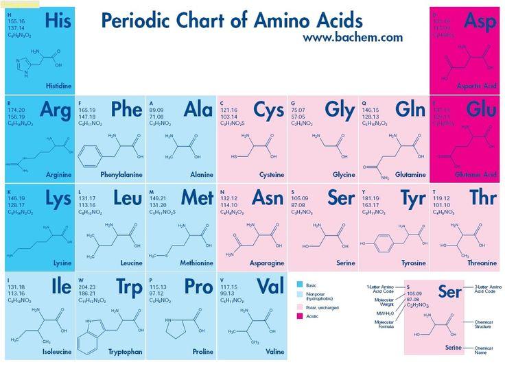 amino acids chart google search a nbde part 1. Black Bedroom Furniture Sets. Home Design Ideas