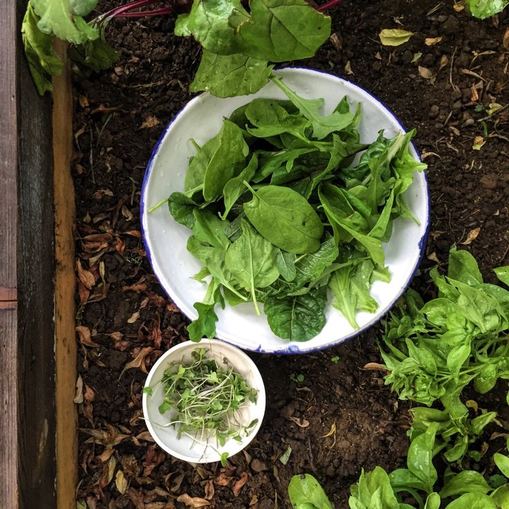Greens picked out of Brixtonfoods garden