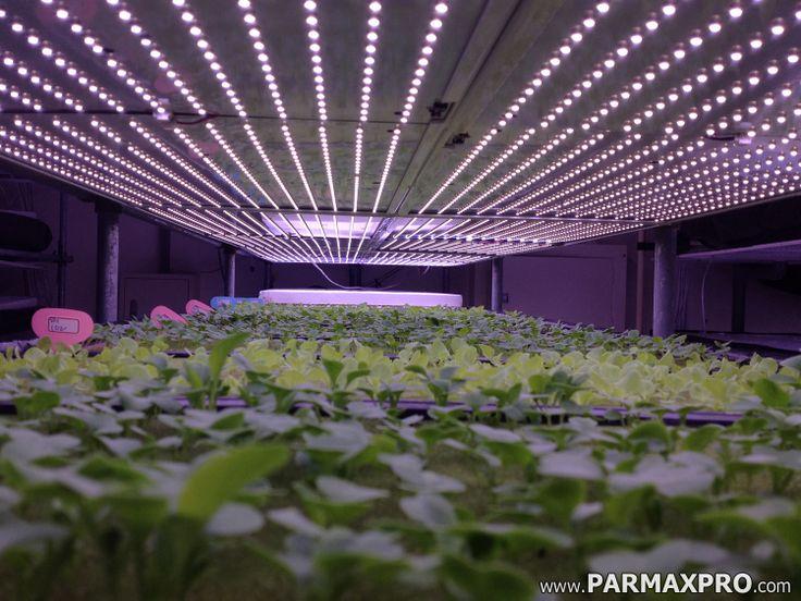 Parmax Professional Series Urban Farm Led Panels Growing