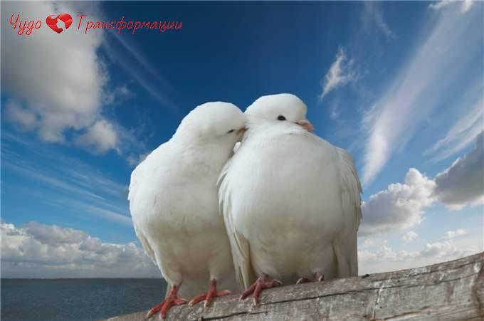 💑 Хорошие отношения дарят вдохновение, мотивацию, любовь, счастье и свет. ☀️💏Создавайте крепкие отношения. ❤️Перестаньте судить, винить или жаловаться на тех или иных людей. 💎Это пустая трата энергии.👍 Направляйте её в позитивные взаимоотношения.💗