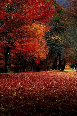 Herbst Impressionen