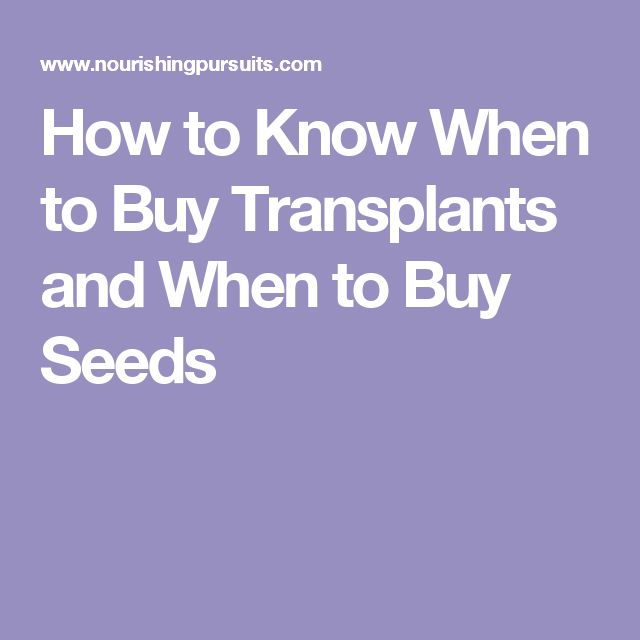 Great How to Know When to Buy Transplants and When to Buy Seeds