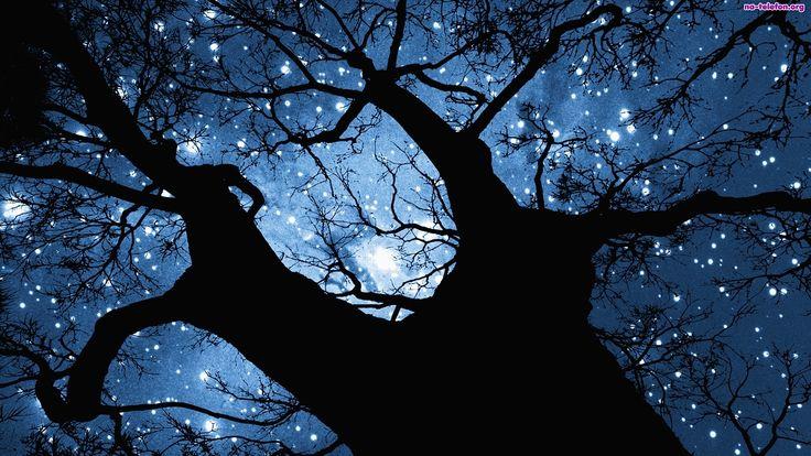 Drzewo, Gwiazdy, Niebo