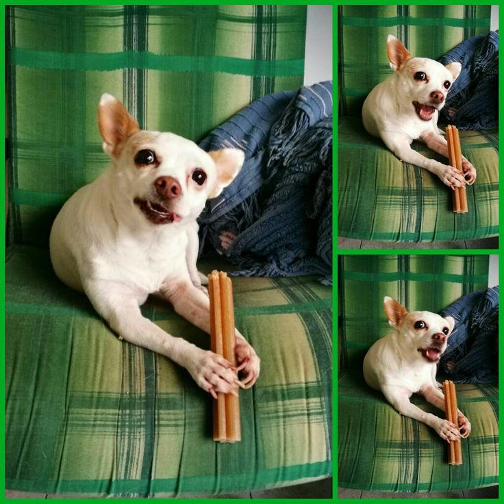 #dogs #animali