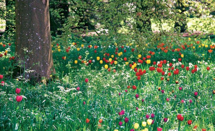 Kein Garten ist perfekt! Überall gibt es schwierige Gartenecken, die einen weniger schönen Anblick bieten – sei es der Kompost- oder Mülltonnenplatz, der Hang hinterm Haus, die kahle Sichtschutzwand oder das Beet im Schatten. Lassen Sie sich von unseren Ideen inspirieren!