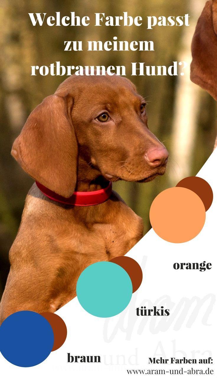 Hundeknochen Test 2020 Unsere Top Empfehlungen Im Vergleich
