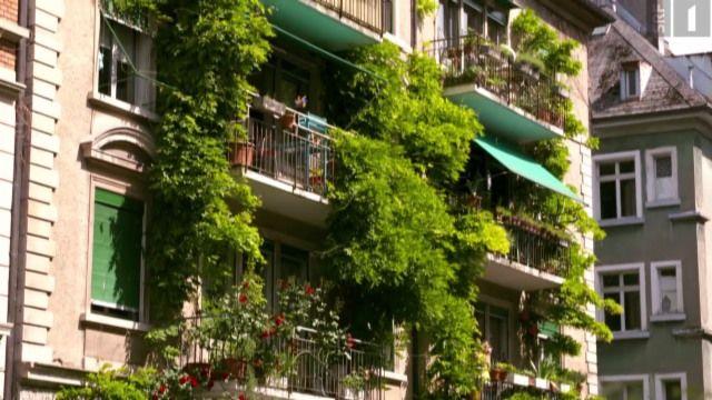 In unseren Städten sucht man Äpfel- oder Birnenbäume vergebens. Die Expertin für Urban Agriculture Tilla Künzli trifft auf Maurice Maggi, ein erfahrener Guerilla Gärtner. Gemeinsam wollen sie Obstbäume zurück in die Schweizer Städte holen. Eine heimliche Nacht- und Nebel-Aktion.