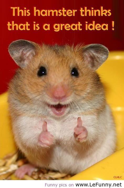 Lustige Hamster Bilder
