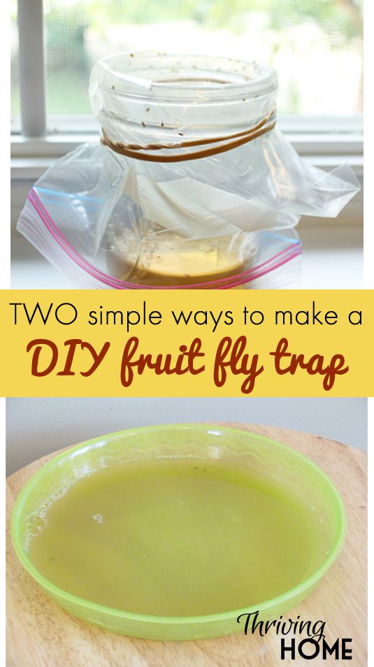 Best 25+ What kills fruit flies ideas on Pinterest   Fruit fly ...