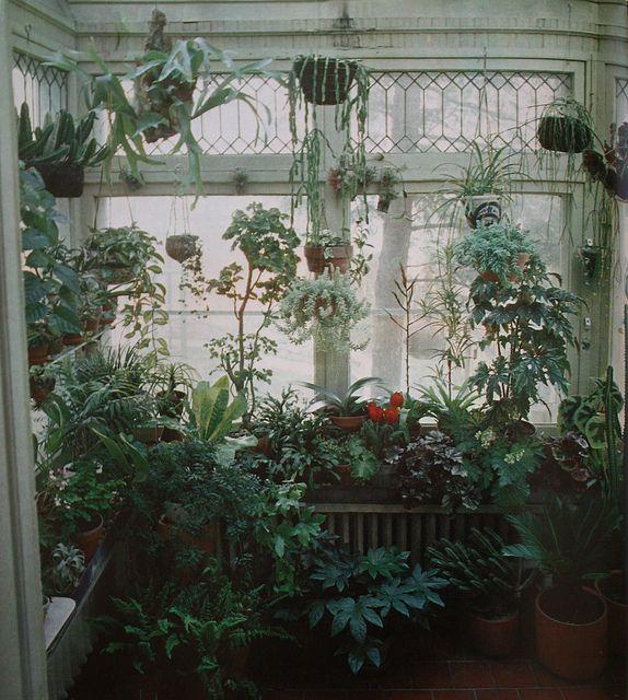 Growing A Garden Indoors 119 best plants images on pinterest green plants plants and botany indoor jungle cactus plantstropical plantspotted plantsgarden workwithnaturefo