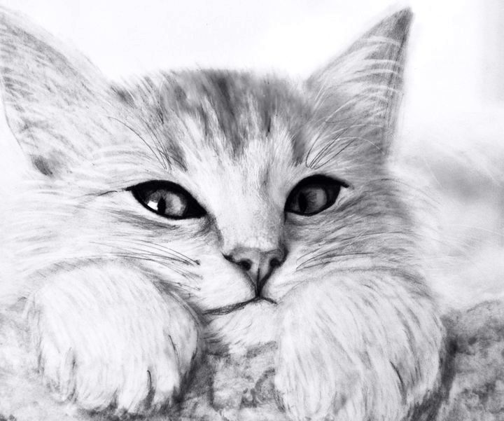 Ростова картинки, котята картинки рисунки
