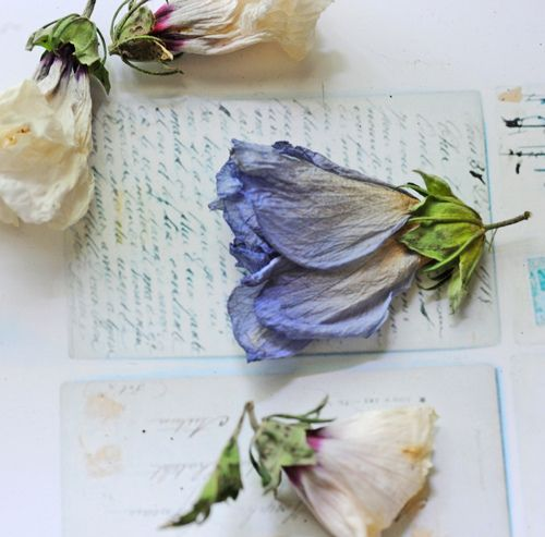 Pressing flowers is a passion of mine when I travel. I bring back found petals pressed in my travel guides.