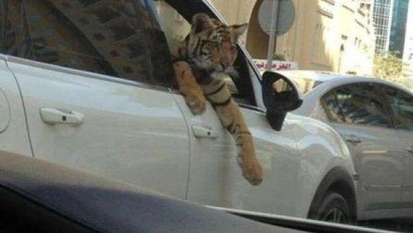 Vtipné momentky z Dubaje - 7