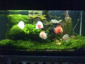 Jual Ikan Hias Aquascape Jakarta