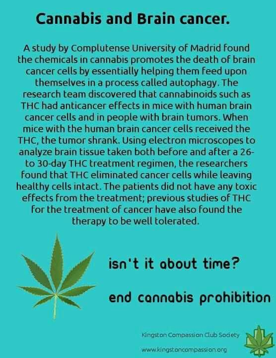 Cannabis and brain cancer... I've never been an advocate for cannabis, but anything to cure Jude is okay in my book.