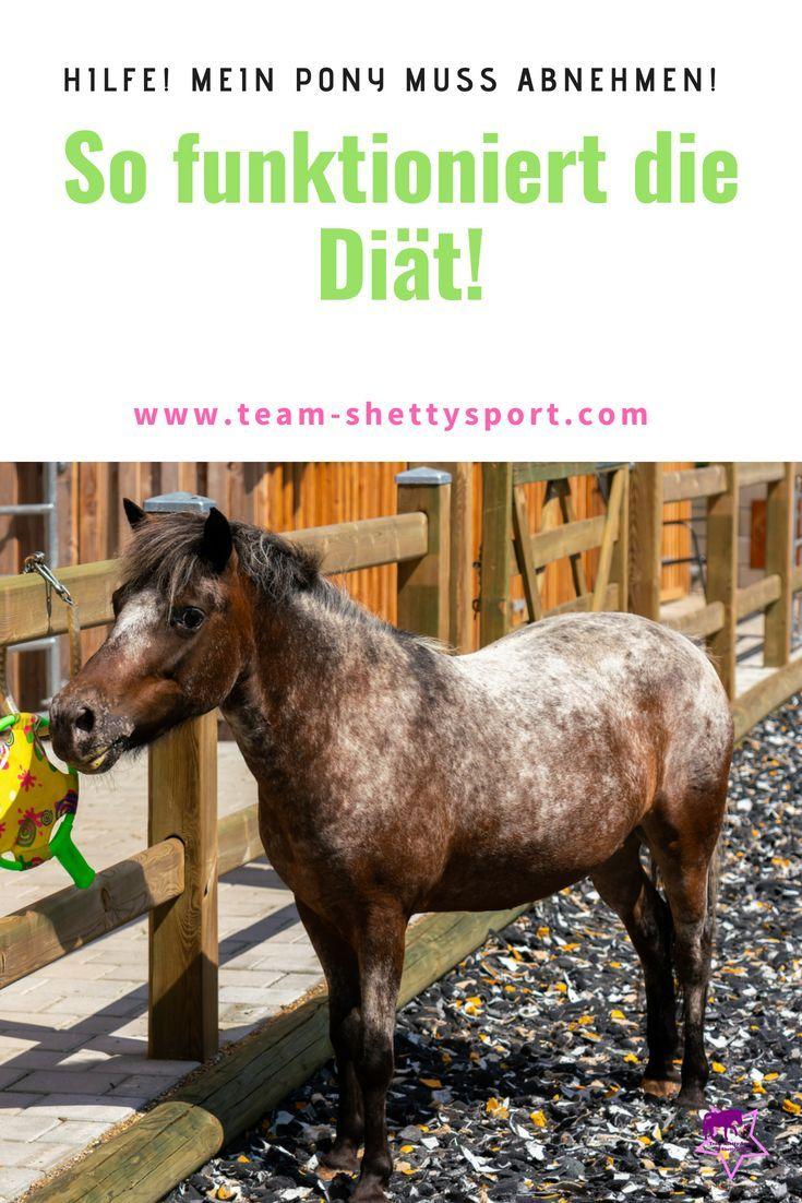 Hufschuh Behandlungsschuh Hufverband Schutz Huf Hufrehe Hufabszess Pferd