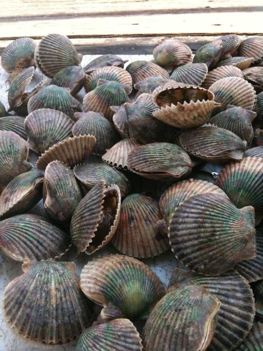 8 best steinhatchee images on pinterest steinhatchee for Steinhatchee fl fishing
