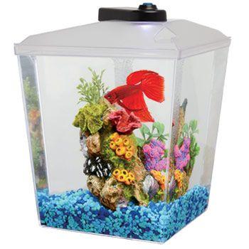 Petco 1 Gallon Corner Aquarium Kit (With images) Corner