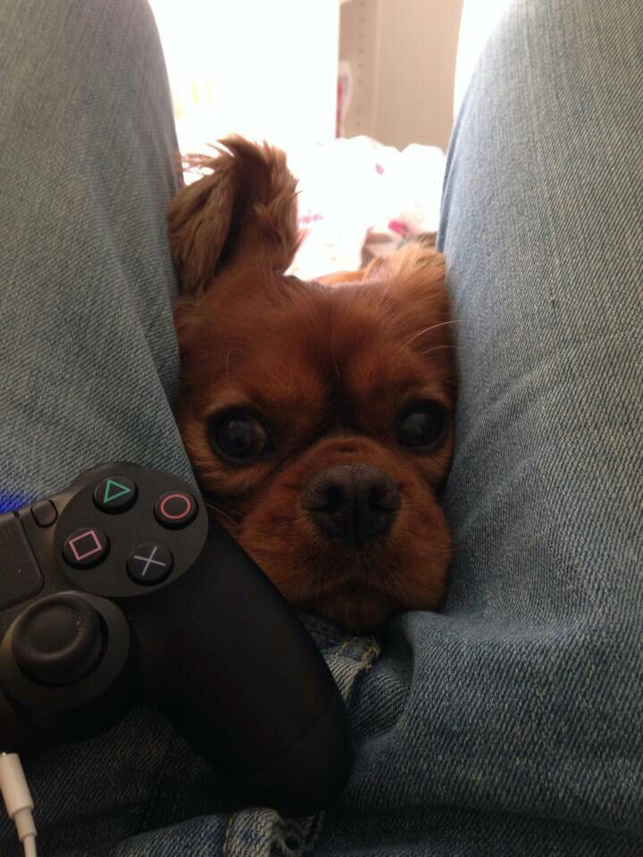stop playing the PS4!