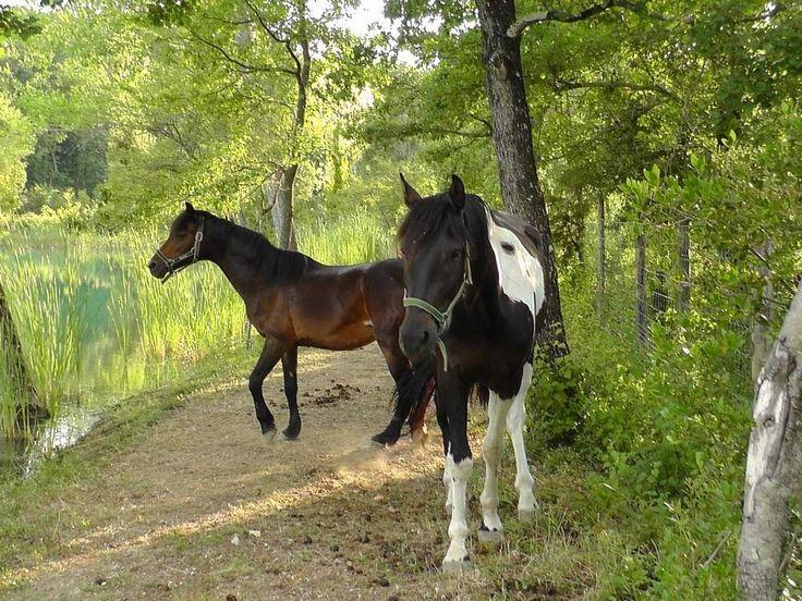 Cavalli a passeggio !! che meraviglia ;) #animali #lago #cavallo #animals #passeggiata #correre #liberi #carezze