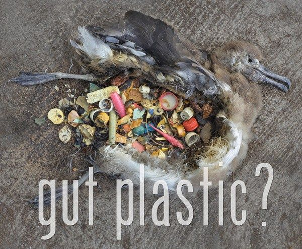 15 ways you can reduce your daily use of plastic: