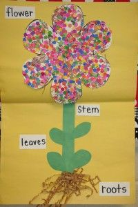Sprouting Flowers Lesson Plan