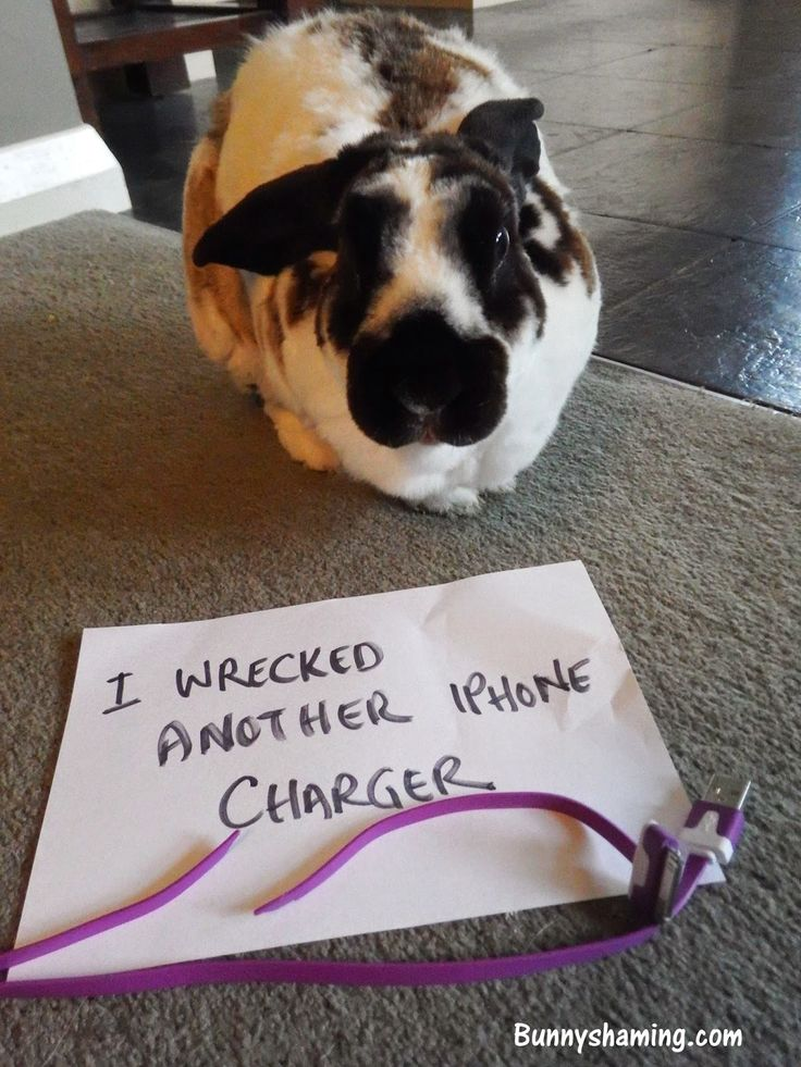 Bunny Shaming - When will you learn to not leave them where I can get to them?
