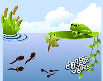 Frog Life Cycle Webquest