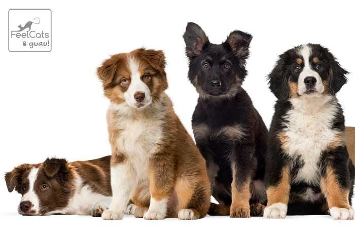 Nombres Para Perros Top 100 Más Bonitos Y Originales Nombres De Perro Hembra Nombres Para Perros Machos Nombres De Perros