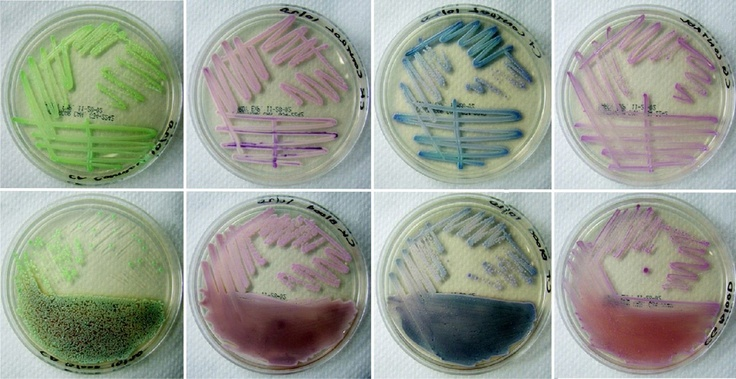 Microbiology different tops