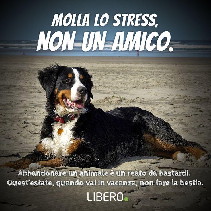 Campagna 2014 contro l'abbandono degli animali. Realizzata per Libero.it con protagonista un simpatico amico a quattro zampe :)